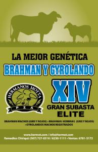 Gran Subasta Elite, Hermot 2019